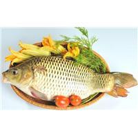 Chữa bệnh xuất tinh sớm cực hay bằng cá