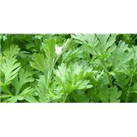 Công dụng các loại lá giúp trị bệnh viêm vùng kín