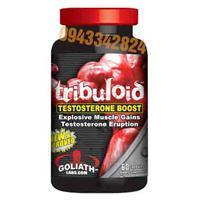 Thuốc Tăng Cơ Tribuloid Testosterone Boost